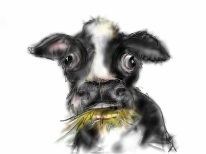 This lovely cow hanging around eating hay just drifted from my demented brain into my hand and onto the IPad.